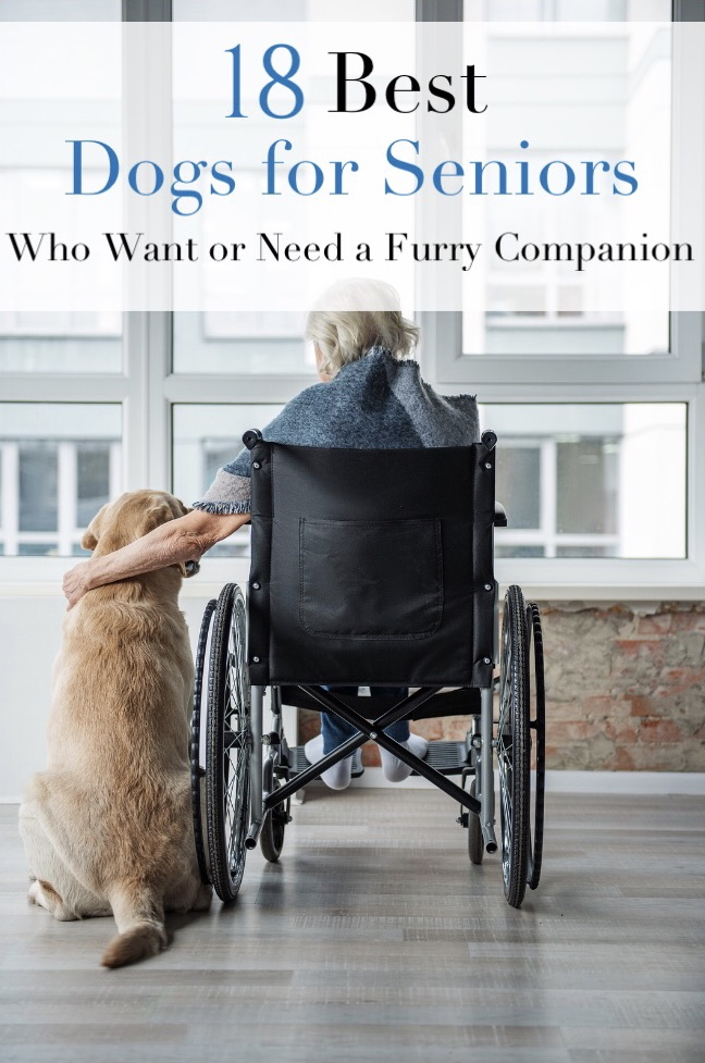 18 Good Dogs for Seniors Who Want or Need a Furry Companion